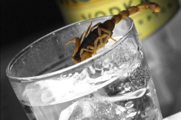 scorpion.vodka