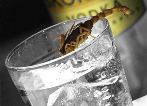 scorpion.vodka