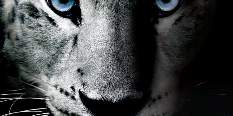 Snow Leopard Vodka_Bendita Vodka